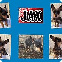 Adopt A Pet :: JAX - Plano, TX