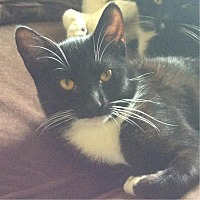 Adopt A Pet :: Saki Sox - Palo Alto, CA