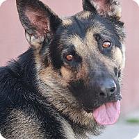 Adopt A Pet :: Jango von Janzig - Los Angeles, CA