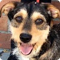 Adopt A Pet :: ROCCO (video) - Los Angeles, CA