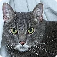 Adopt A Pet :: Hannibal - Sacramento, CA