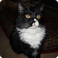 Adopt A Pet :: Tinker Bell - Salem, OR