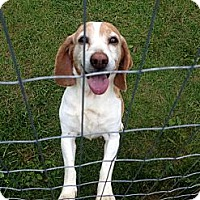 Adopt A Pet :: Miss Redd (Courtesy) - Indianapolis, IN