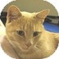 Adopt A Pet :: Chirpa - Vancouver, BC