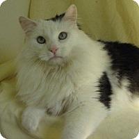 Adopt A Pet :: Sambucca - Milwaukee, WI