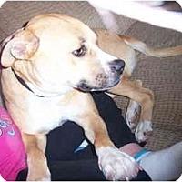 Adopt A Pet :: Penny Lane - Milwaukee, WI