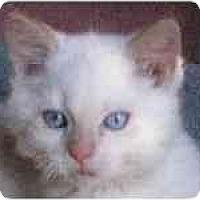 Adopt A Pet :: Bronwin - Portland, OR