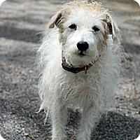 Adopt A Pet :: Lucky - Tinton Falls, NJ