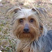 Adopt A Pet :: Mariah - Mocksville, NC