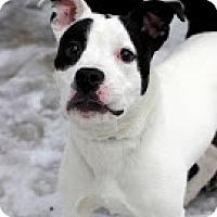 Adopt A Pet :: Dallas - Tinton Falls, NJ