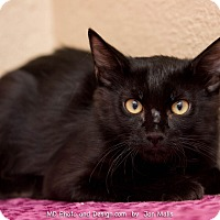 Adopt A Pet :: Rockwood - Fountain Hills, AZ