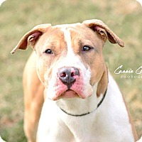 Adopt A Pet :: Winky - ADOPTED! - Zanesville, OH