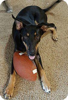 German Shepherd Dog/Rottweiler Mix Dog for adoption in Cabot, Arkansas - Jake
