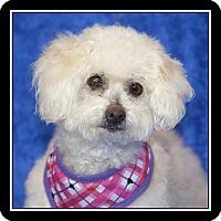 Adopt A Pet :: Gypsy Rose - San Diego, CA