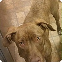 Adopt A Pet :: Madonna - Hopewell Junction, NY