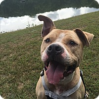 Adopt A Pet :: Tanner - Walden, NY