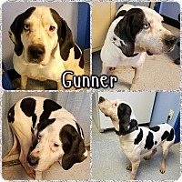 Treeing Walker Coonhound/Catahoula Leopard Dog Mix Dog for adoption in Lagrange, Indiana - Gunner