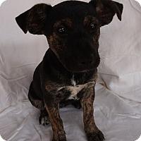 Adopt A Pet :: Mavrick - Oviedo, FL