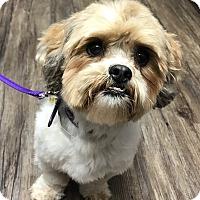Adopt A Pet :: Helga - Los Alamitos, CA