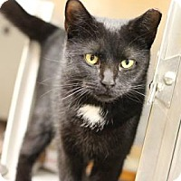 Adopt A Pet :: Noel - Baltimore, MD
