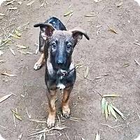 Adopt A Pet :: Finn - San Diego, CA