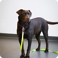 Adopt A Pet :: Whiskey is Reserved - Kirkland, QC