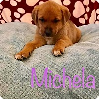 Adopt A Pet :: PP - Michela - Tucson, AZ
