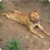 Adopt A Pet :: Puck - Douglasville, GA