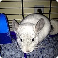 Adopt A Pet :: Oscar - Granby, CT