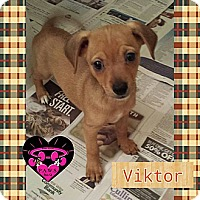 Adopt A Pet :: Viktor - Fowler, CA