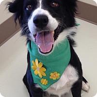 Adopt A Pet :: IRIS - Nampa, ID