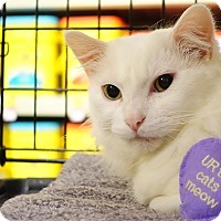 Adopt A Pet :: Frosty - College Station, TX