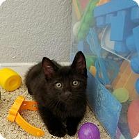 Adopt A Pet :: Maverick - Palmdale, CA