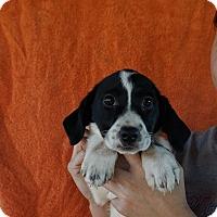 Adopt A Pet :: July - Oviedo, FL