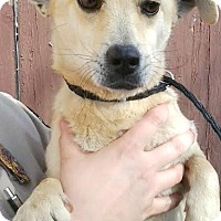 Adopt A Pet :: Blaze-ADOPTION PENDING - Boulder, CO