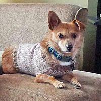 Adopt A Pet :: Hankster - Alpharetta, GA