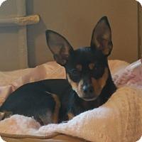 Adopt A Pet :: Mackie - Shelby, NC