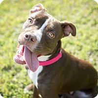 Adopt A Pet :: Cam - Vancouver, BC