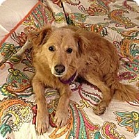 Adopt A Pet :: Bubbles - White River Junction, VT