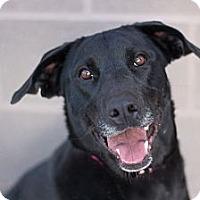 Adopt A Pet :: Jordan - Cheyenne, WY
