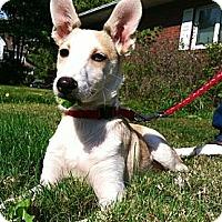 Adopt A Pet :: Pipi - Leetonia, OH