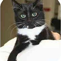 Adopt A Pet :: Dolly - Milwaukee, WI