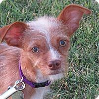 Adopt A Pet :: Fritz - Scottsdale, AZ