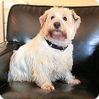 Adopt A Pet :: FRANKIE - GARRETT, IN