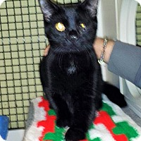 Adopt A Pet :: Elliot - East Meadow, NY