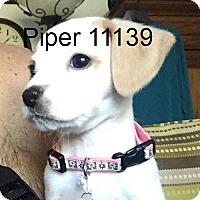 Adopt A Pet :: Piper - baltimore, MD