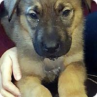 Adopt A Pet :: Jangle-Adopted! - Detroit, MI