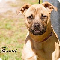 Adopt A Pet :: Thames - Middleburg, FL