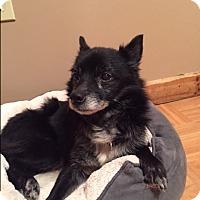 Adopt A Pet :: Cole - Bernardston, MA
