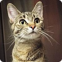 Adopt A Pet :: Sharla - Grants Pass, OR